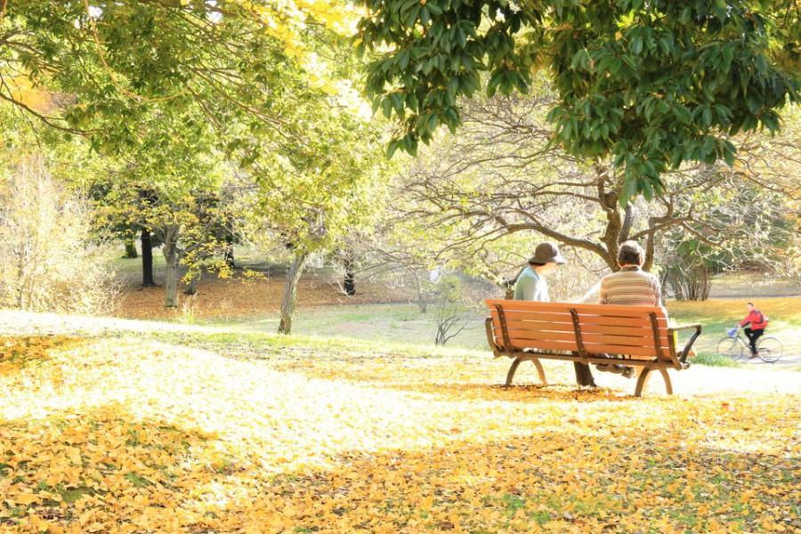 昭和記念公園の紅葉-Japan Nomad (10)