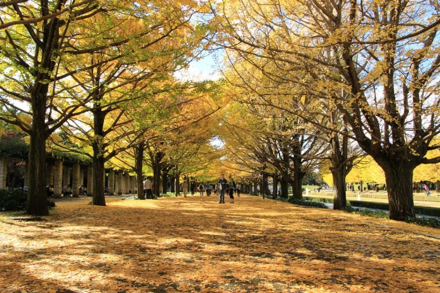 昭和記念公園の紅葉-Japan Nomad (8)