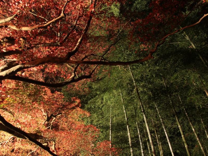 百草園-Japan Nomad (1)