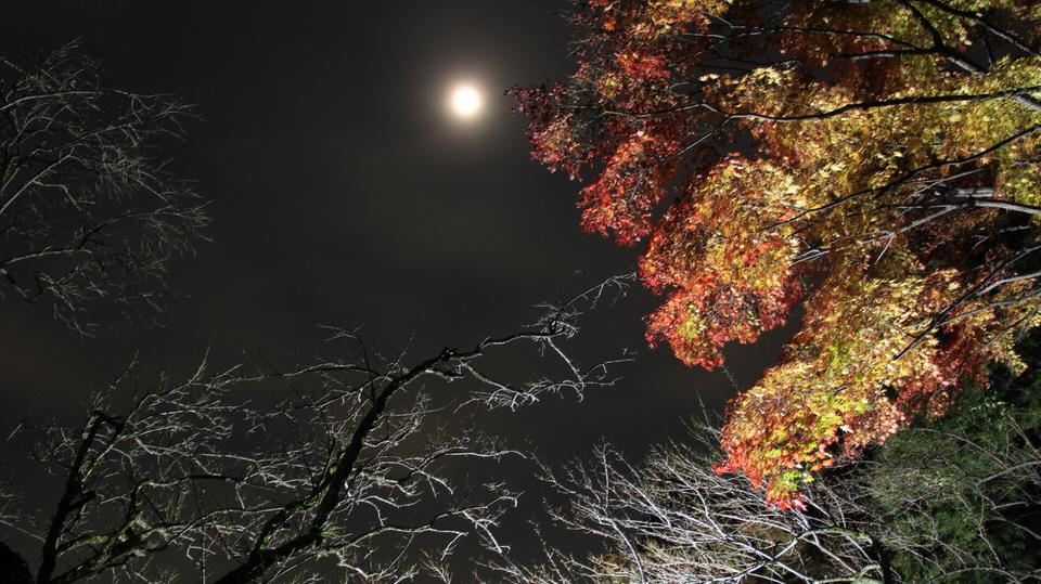 百草園-Japan Nomad (4)