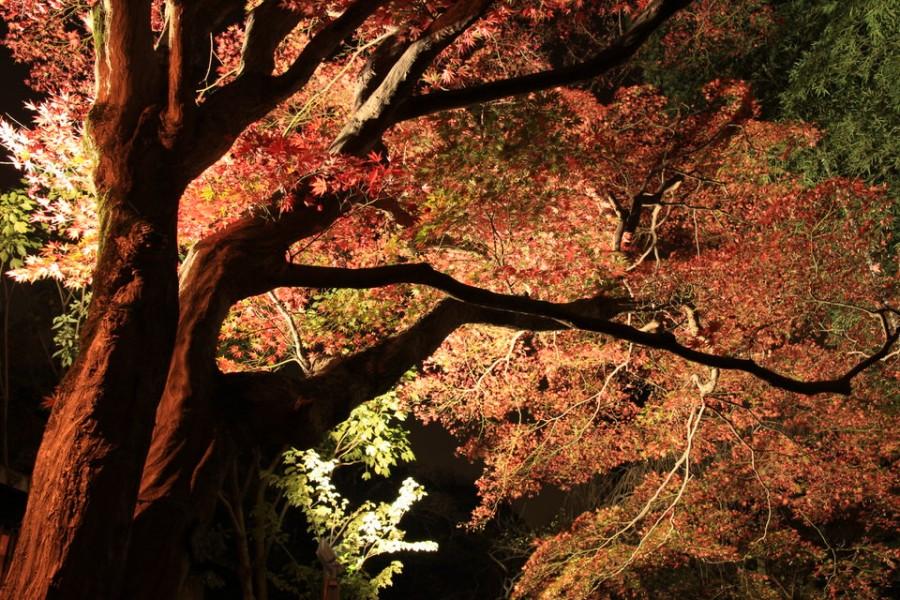 百草園-Japan Nomad (7)
