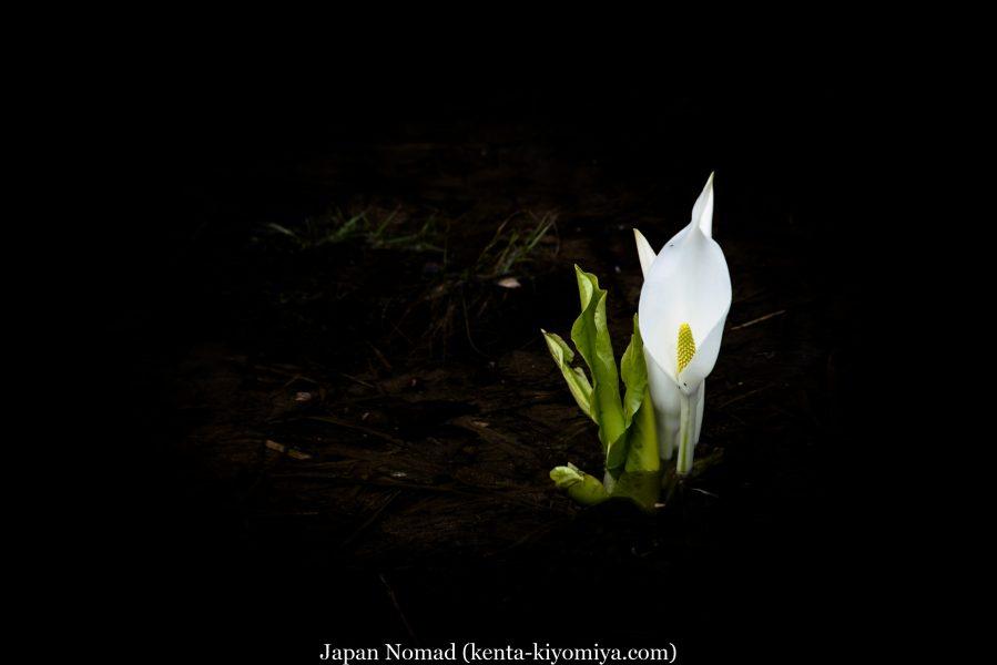 日本一周-Japan Nomad(1) (34)