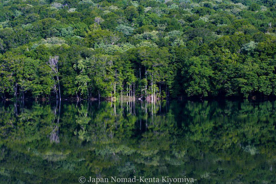 【旅51日目】息を飲む美しさ、「蔦沼」が映す鏡張りの世界