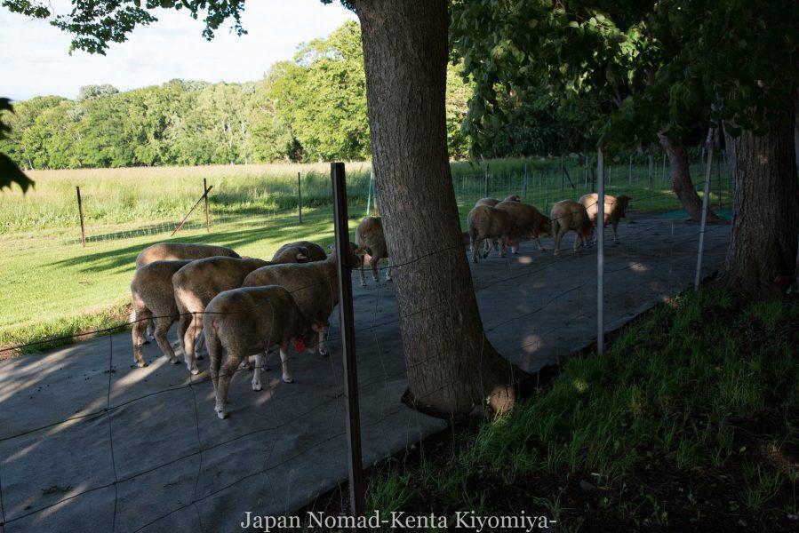 自転車日本一周69日目(Mr. Bicycle)-Japan Nomad (47)