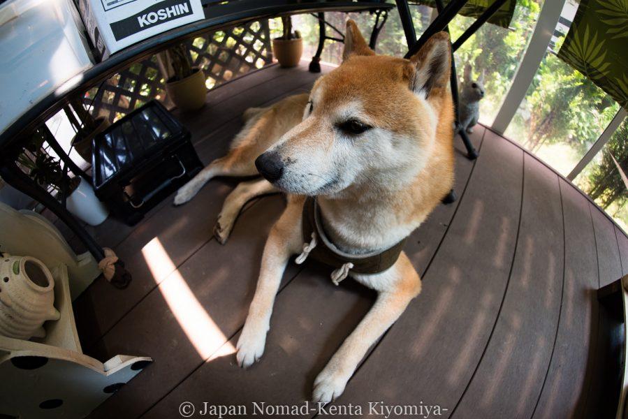 自転車日本一周(サムヤン魚眼レンズ)-Japan Nomad (5)
