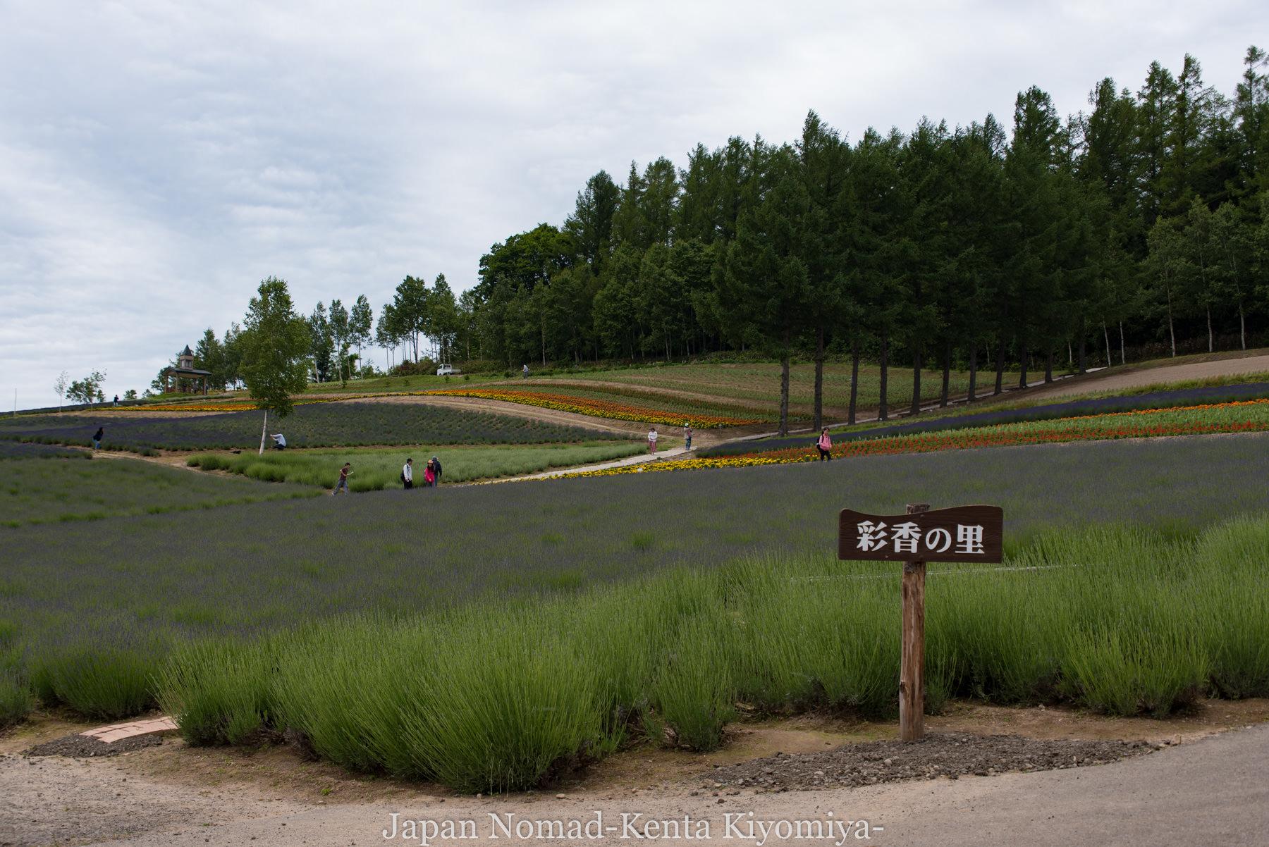 自転車日本一周71日目(富良野ラベンダー)-Japan Nomad (10)