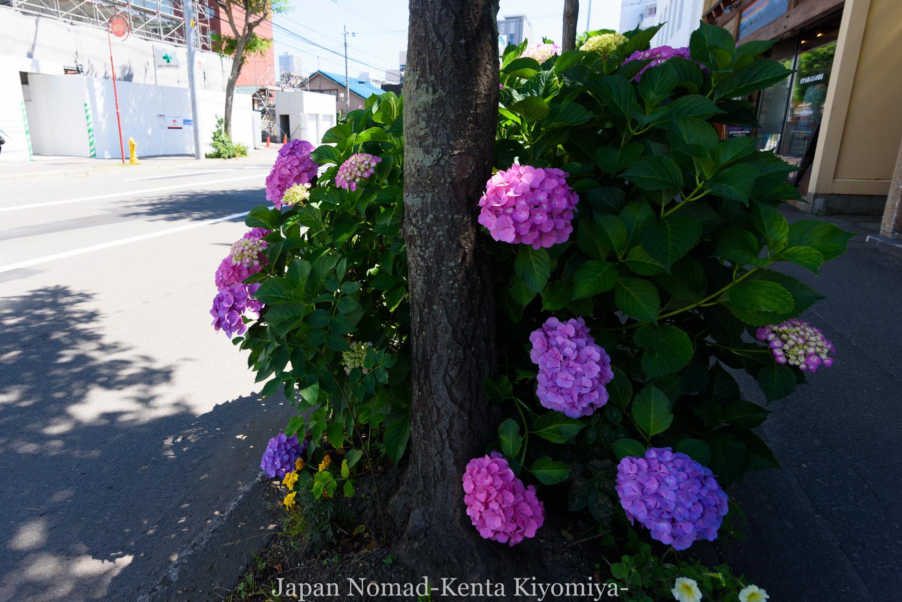 自転車日本一周88日目(iphone修理)-Japan Nomad (9)
