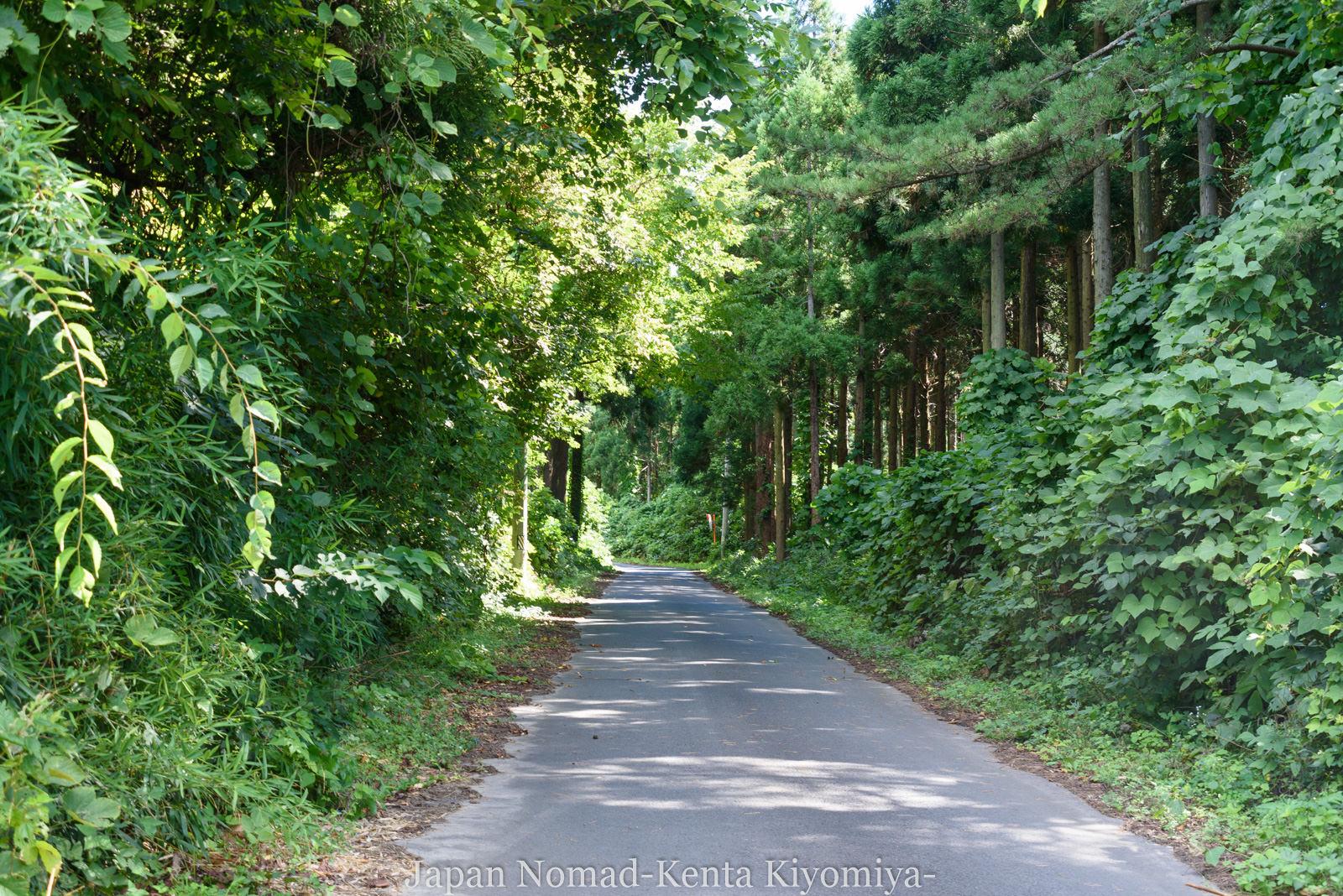 自転車日本一周125日目(白神山地、白神岳)-Japan Nomad (25)